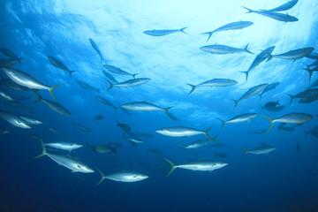 Fototapete - Tuna fish