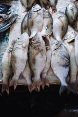 Fish Market in Stone Town, Zanzibar