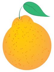 Orange, hallabong, fruit, exotic, jeju