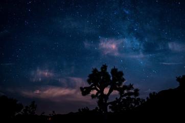 Desert Tree with the Sky