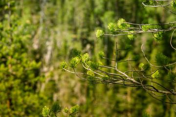 A beautiful Finnish forest landscape