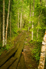 A beautiful hiking path in Finland forest