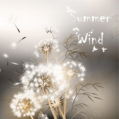 Background with dandelions. Summer wind