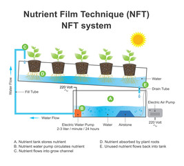 nutrient film technique system.