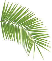 Palm tree. Global colors used