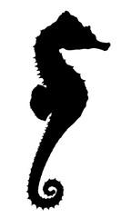 Silhouette eines Seepferdchens