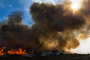 Raging Fynbos Fire with thick smoke