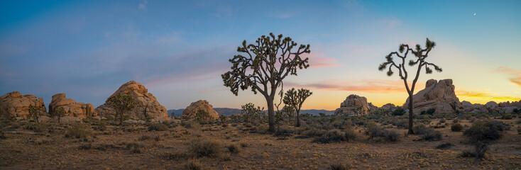 Gorgeous Sunset Joshua Tree Landscape