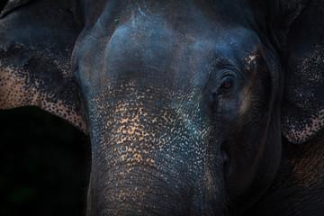 Elephant face background