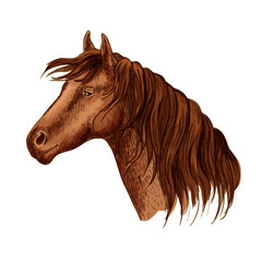 Vector portrait of brown graceful horse mare