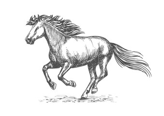 White strong horse galloping on sport races