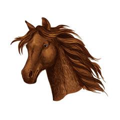Arabian brown horse race sport emblem