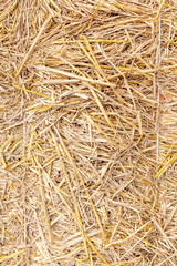 Close up straw texture, dried natural golden hay background.