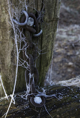 chain in the forest