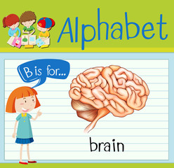 Flashcard letter B is for brain