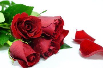 red rose with green leaf on the white background (isolated) as gift on valentine days