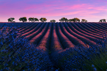 Door stickers Lavender Pink sunrise on the famous lavender franch Valensole lavnder fields.