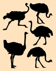 Ostrich birds animal silhouette. Good use for symbol, logo, web icon, sign, or any design you want.