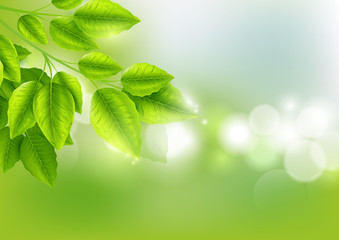 Fresh green leaves with Sunny bokeh abstract natural background