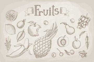 Set of different fruit painted in engraving style on old yellowe
