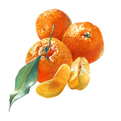 Watercolor illustration of three mandarins with green leaf isolated on white background with clipping path included