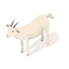 Isometric 3d vector illustration of white goat.