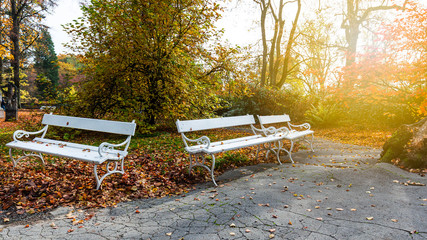 old wooden bench in city park. natural autumn background
