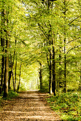 Photo sur Aluminium Bestsellers A pathway covered by leaves in a dense forest with filtered rays