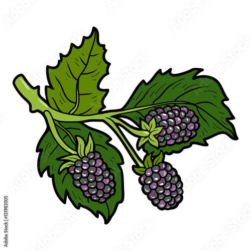 quotcolor image cartoon berry blackberriesquot stock image and