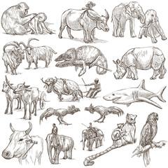 animals around the world - an hand drawn pack