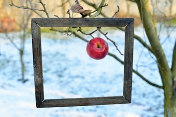 An apple in a old photo frame