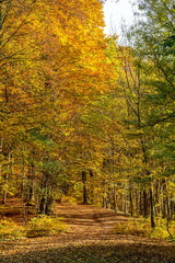 Golden leaves covered forest path in park in October, Bratislava, Slovakia