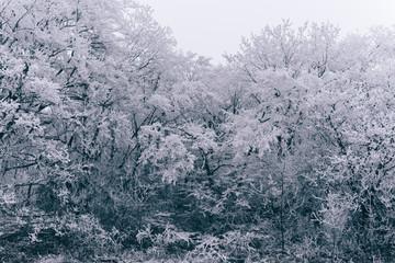 Icey wood