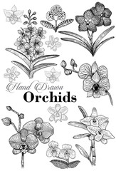 Hand drawn orchid flowers invitation card