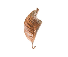 dry leaf set isolated on white backgroud