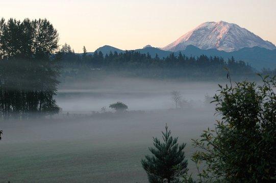 Fog on a field in front of Mount Ranier