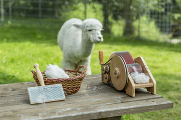 Preparing alpaca wool with drum carder for handspinning