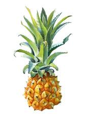 Watercolor illustration of a pineapple isolated on white background with clipping path included