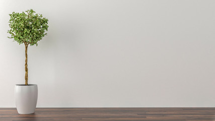 Indoor plants in an empty room with a white wall in the backgrou