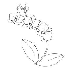 orchid flower contour vector illustration