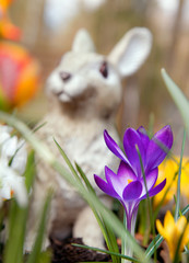Crocus flowers and bunny sculpture