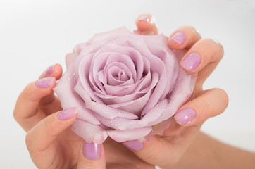 Lilac manicured hands and a rose