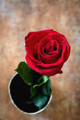 Red rose on rusty background.Love concept valentines day. Copyspace.