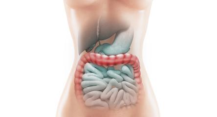 Organi o anatomia con tumori o infiammazioni
