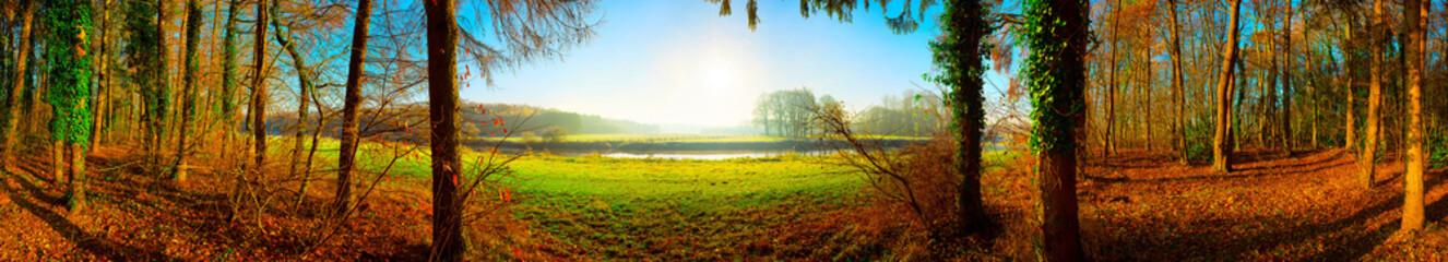 Panorama einer Landschaft im Herbst mit Wald, Wiesen und Sonne
