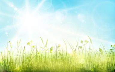 Green grass, blue sky, spring blurred bokeh background