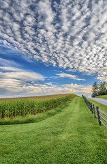 Late Summer Corn Field With Nice Cloudy Sky