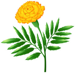 Marigold flower with green leaves