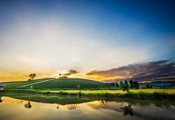 Sunset view of tea plantation landscape in Chiang rai province,