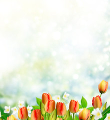 Bright and colorful flowers tulips on the background of spring l
